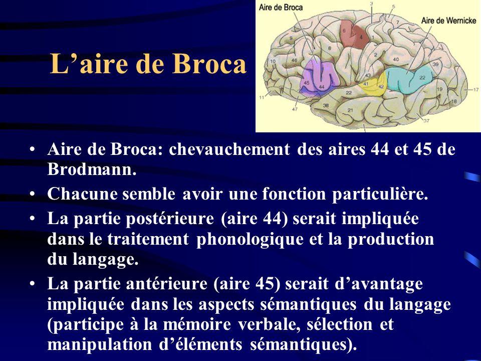 Laire de Broca Aire de Broca: chevauchement des aires 44 et 45 de Brodmann. Chacune semble avoir une fonction particulière. La partie postérieure (air