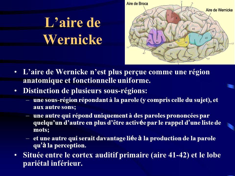 Laire de Wernicke Laire de Wernicke nest plus perçue comme une région anatomique et fonctionnelle uniforme. Distinction de plusieurs sous-régions: –un
