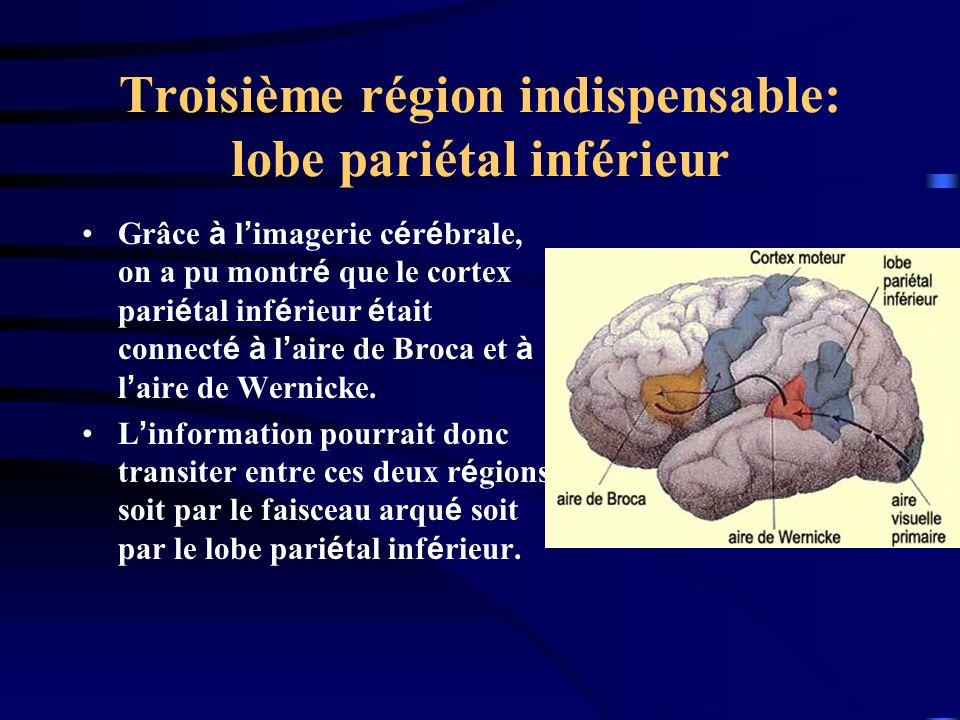 Troisième région indispensable: lobe pariétal inférieur Grâce à l imagerie c é r é brale, on a pu montr é que le cortex pari é tal inf é rieur é tait