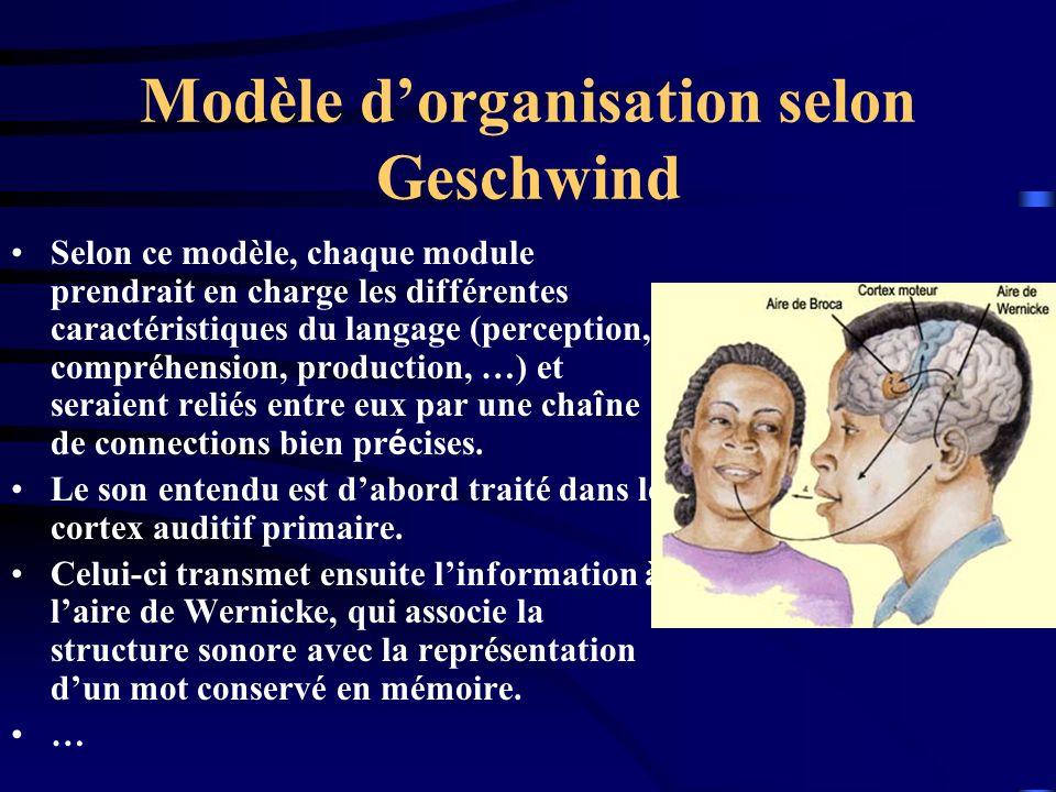 Modèle dorganisation selon Geschwind Selon ce modèle, chaque module prendrait en charge les différentes caractéristiques du langage (perception, compr