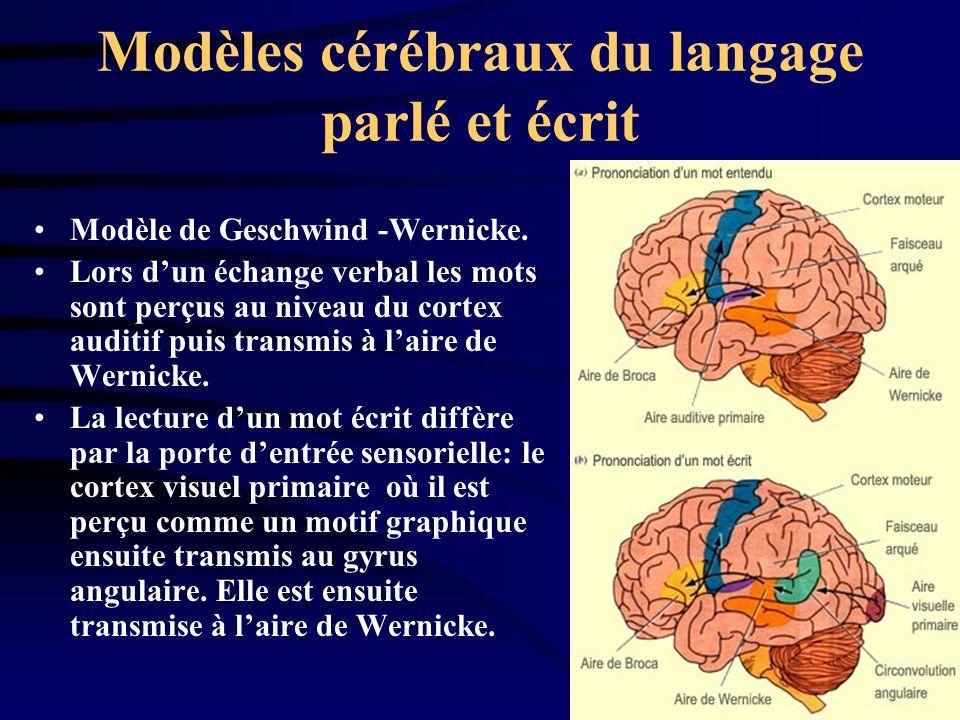 Modèles cérébraux du langage parlé et écrit Modèle de Geschwind -Wernicke. Lors dun échange verbal les mots sont perçus au niveau du cortex auditif pu