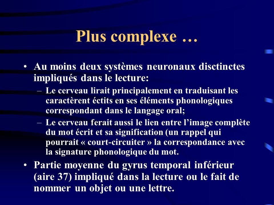 Plus complexe … Au moins deux systèmes neuronaux disctinctes impliqués dans le lecture: –Le cerveau lirait principalement en traduisant les caractèren
