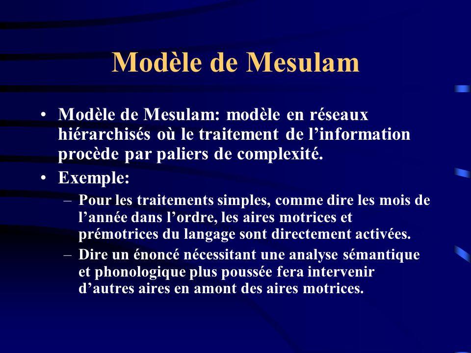 Modèle de Mesulam Modèle de Mesulam: modèle en réseaux hiérarchisés où le traitement de linformation procède par paliers de complexité. Exemple: –Pour