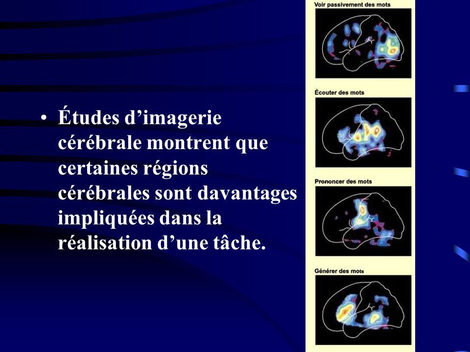 Études dimagerie cérébrale montrent que certaines régions cérébrales sont davantages impliquées dans la réalisation dune tâche.