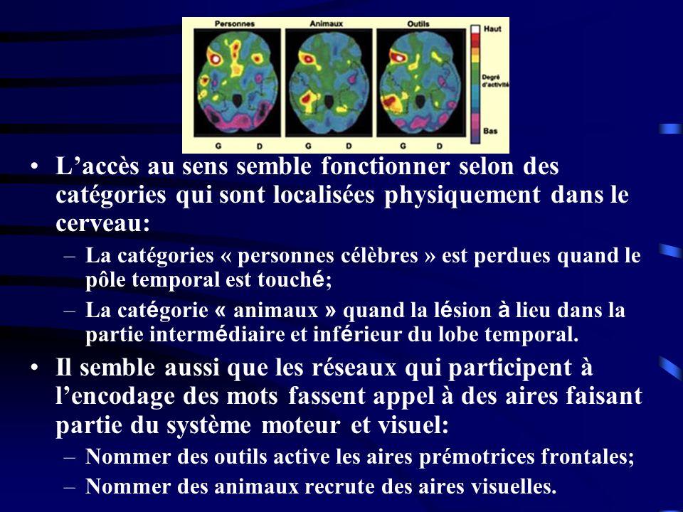 Laccès au sens semble fonctionner selon des catégories qui sont localisées physiquement dans le cerveau: –La catégories « personnes célèbres » est per