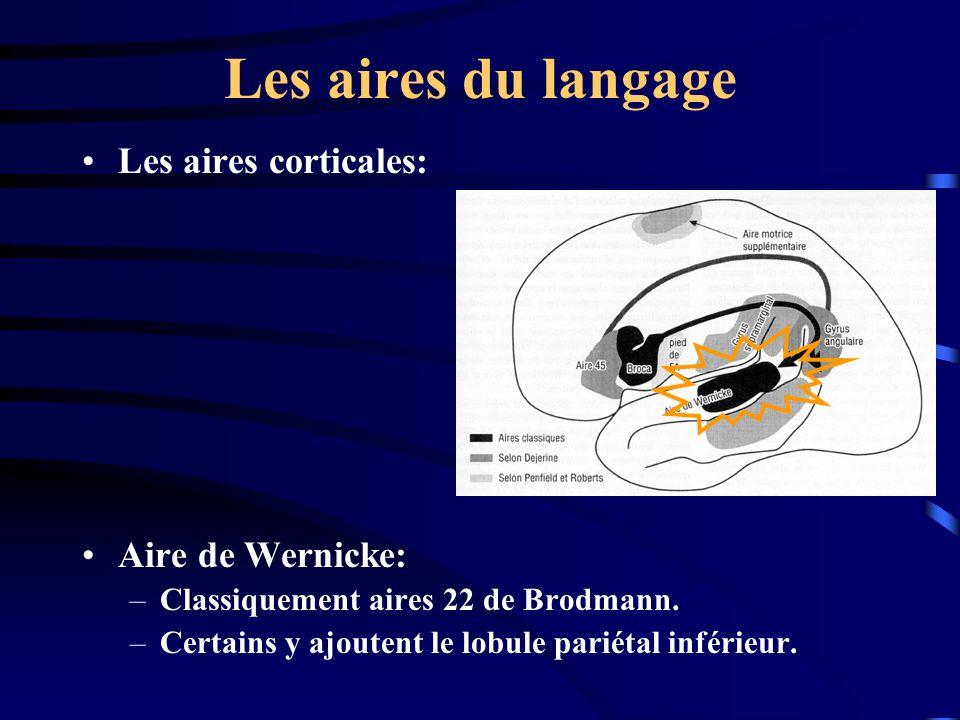 Les aires du langage Les aires corticales: Aire de Wernicke: –Classiquement aires 22 de Brodmann. –Certains y ajoutent le lobule pariétal inférieur.