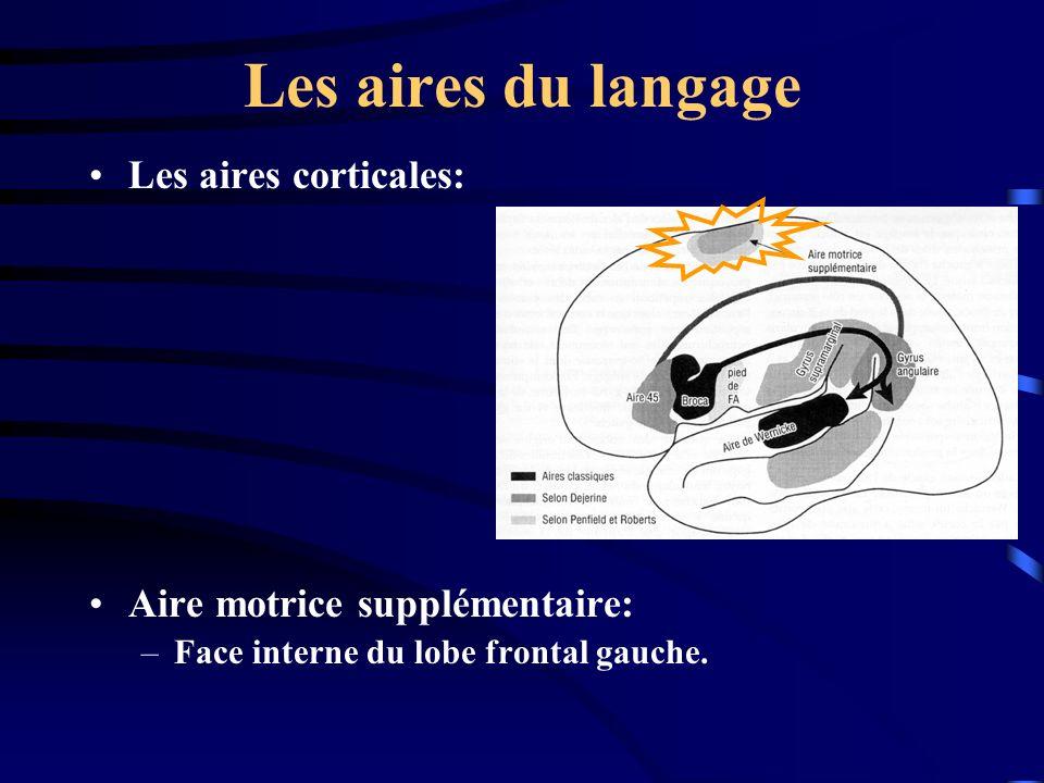 Les aires du langage Les aires corticales: Aire motrice supplémentaire: –Face interne du lobe frontal gauche.
