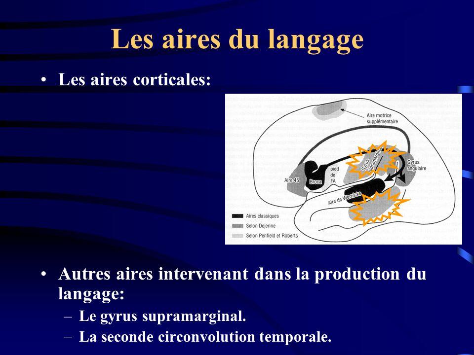 Les aires du langage Les aires corticales: Autres aires intervenant dans la production du langage: –Le gyrus supramarginal. –La seconde circonvolution