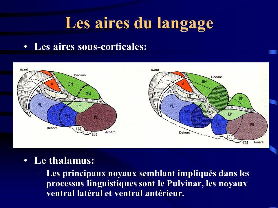 Les aires du langage Les aires sous-corticales: Le thalamus: –Les principaux noyaux semblant impliqués dans les processus linguistiques sont le Pulvin