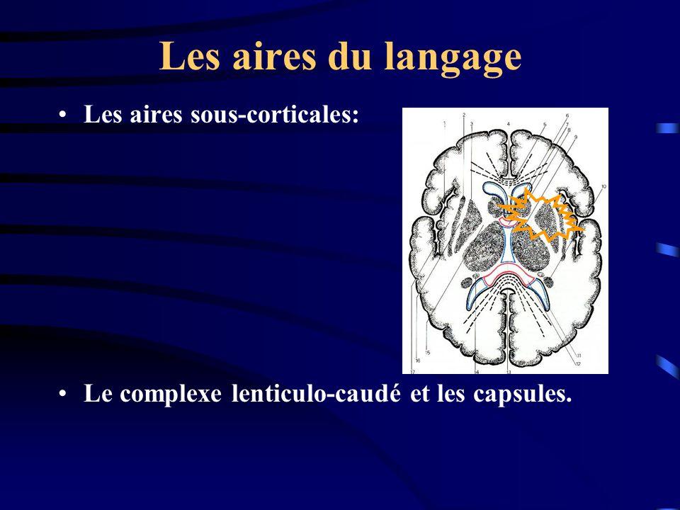 Les aires du langage Les aires sous-corticales: Le complexe lenticulo-caudé et les capsules.
