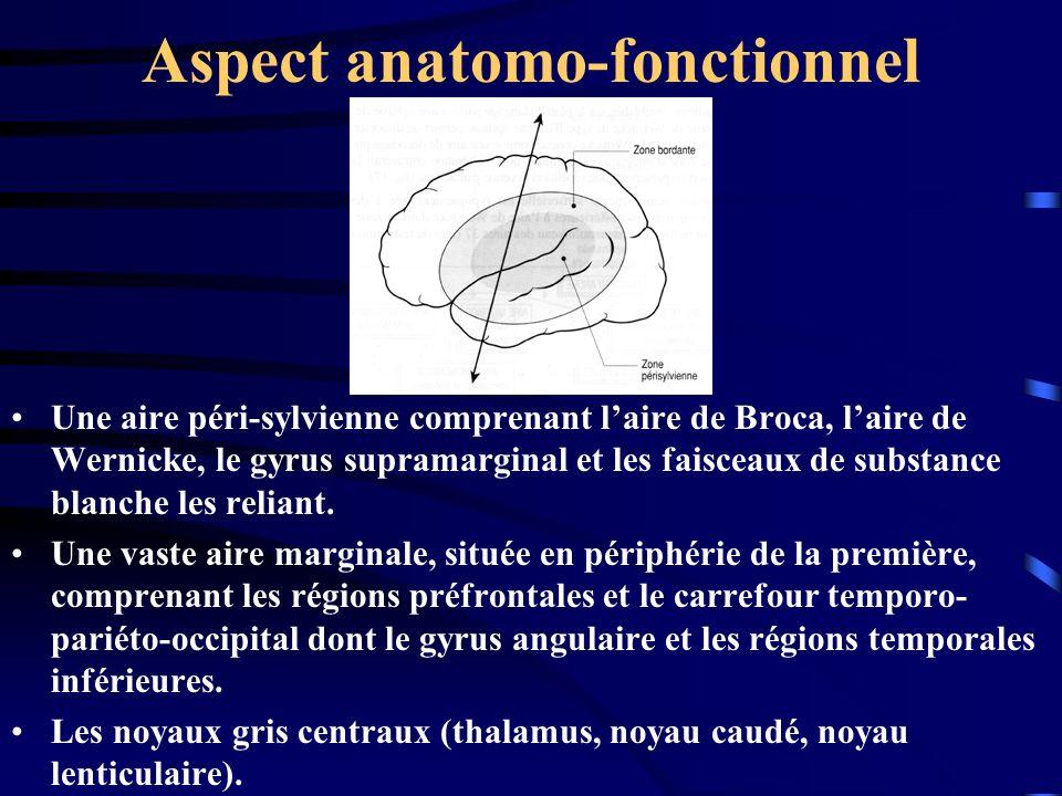 Aspect anatomo-fonctionnel Une aire péri-sylvienne comprenant laire de Broca, laire de Wernicke, le gyrus supramarginal et les faisceaux de substance