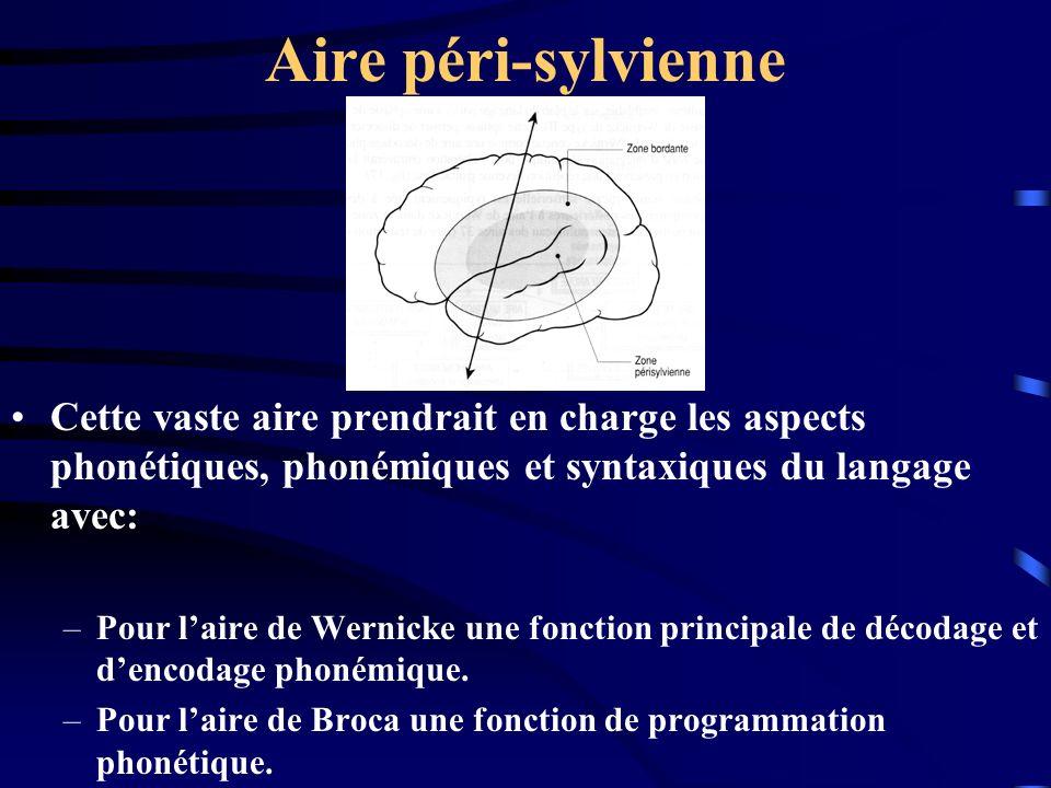 Aire péri-sylvienne Cette vaste aire prendrait en charge les aspects phonétiques, phonémiques et syntaxiques du langage avec: –Pour laire de Wernicke