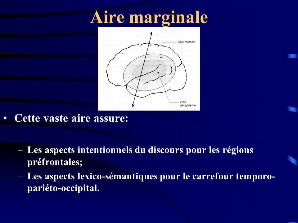 Aire marginale Cette vaste aire assure: –Les aspects intentionnels du discours pour les régions préfrontales; –Les aspects lexico-sémantiques pour le