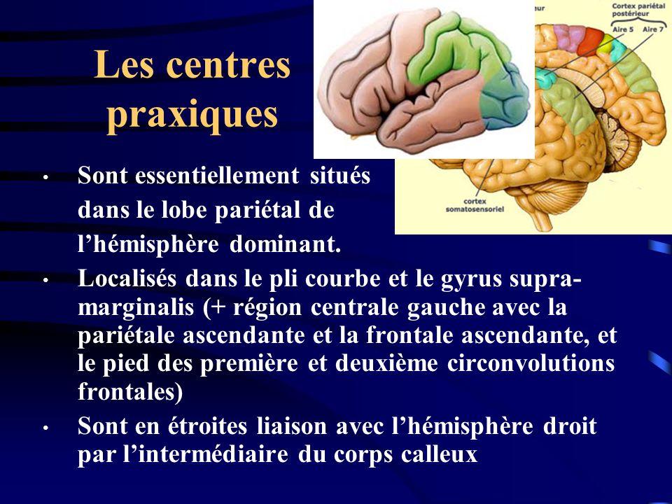 Les centres praxiques Sont essentiellement situés dans le lobe pariétal de lhémisphère dominant. Localisés dans le pli courbe et le gyrus supra- margi