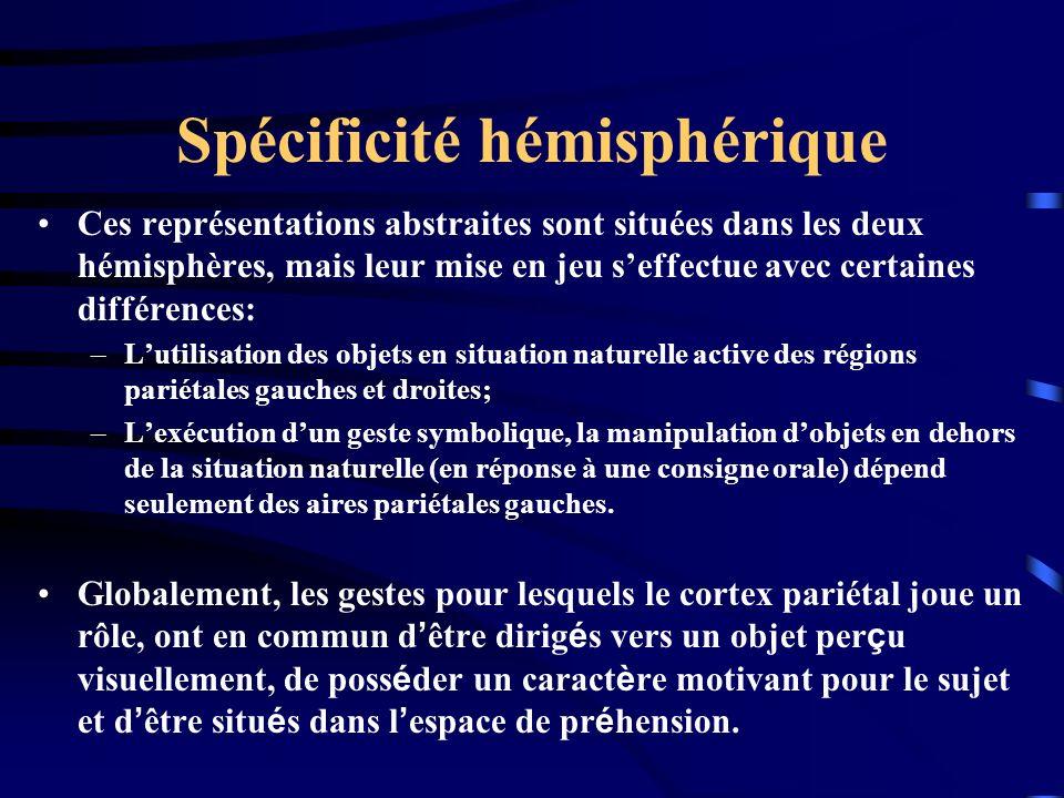 Spécificité hémisphérique Ces représentations abstraites sont situées dans les deux hémisphères, mais leur mise en jeu seffectue avec certaines différ