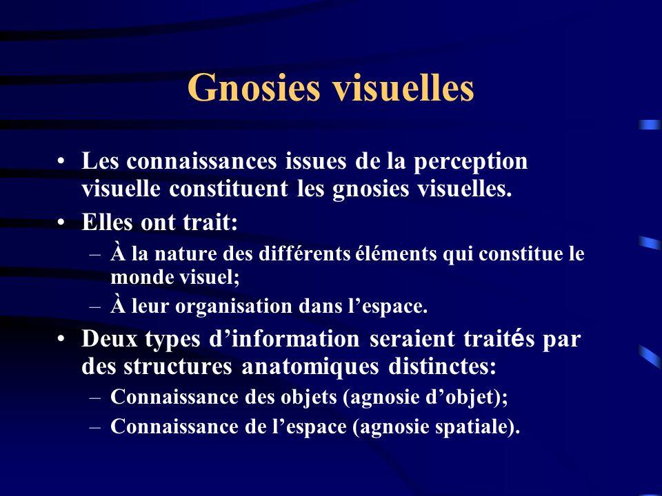 Gnosies visuelles Les connaissances issues de la perception visuelle constituent les gnosies visuelles. Elles ont trait: –À la nature des différents é