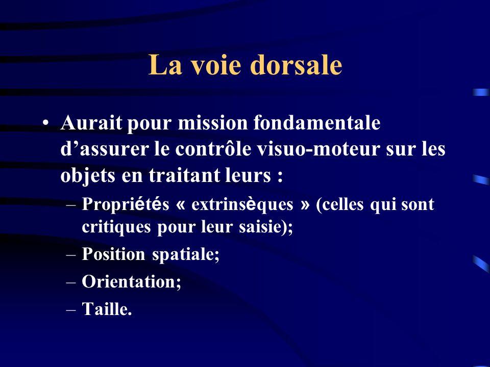 La voie dorsale Aurait pour mission fondamentale dassurer le contrôle visuo-moteur sur les objets en traitant leurs : –Propri é t é s « extrins è ques