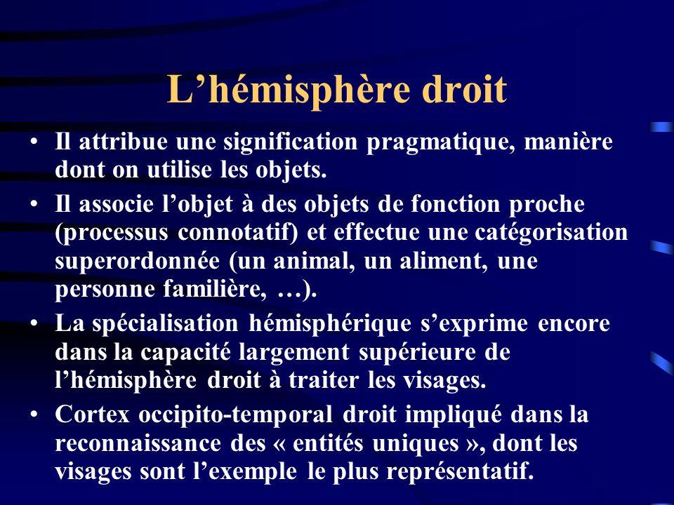 Lhémisphère droit Il attribue une signification pragmatique, manière dont on utilise les objets. Il associe lobjet à des objets de fonction proche (pr