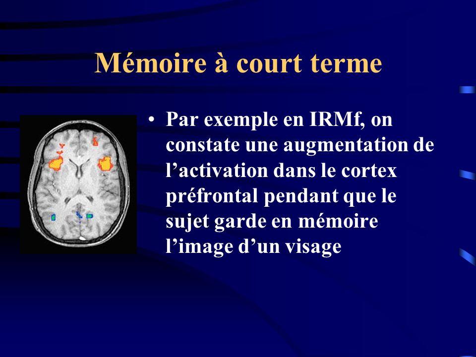 Mémoire à court terme Par exemple en IRMf, on constate une augmentation de lactivation dans le cortex préfrontal pendant que le sujet garde en mémoire