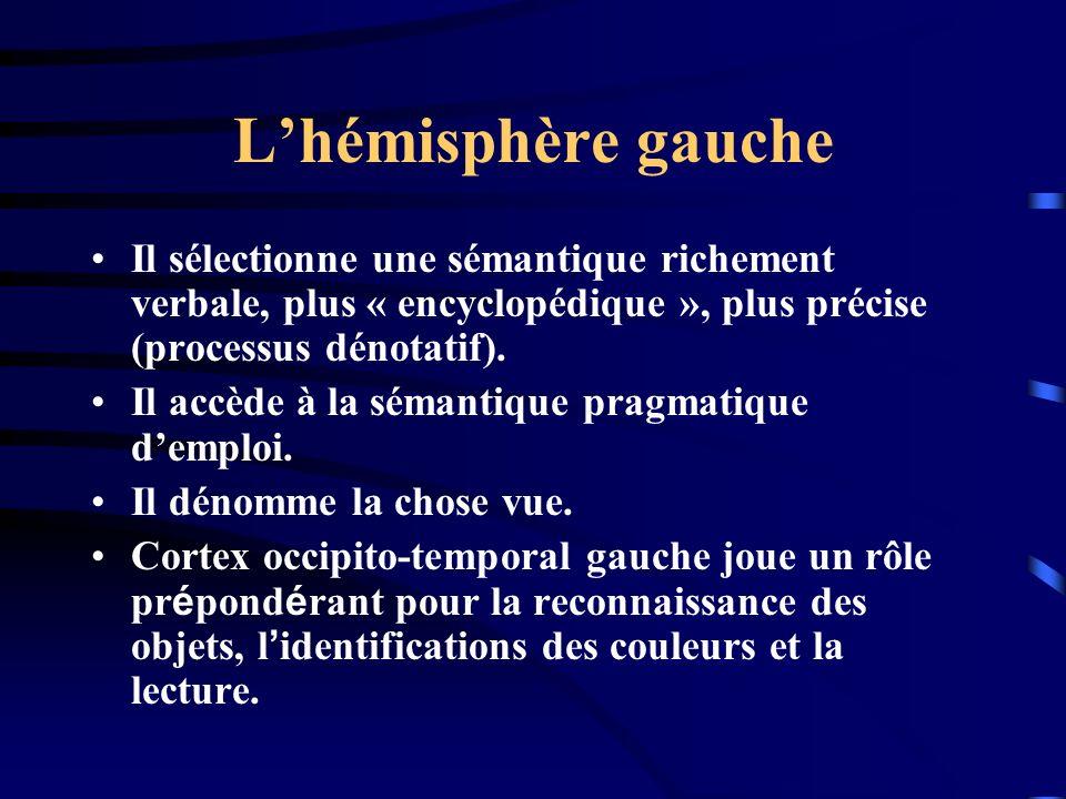 Lhémisphère gauche Il sélectionne une sémantique richement verbale, plus « encyclopédique », plus précise (processus dénotatif). Il accède à la sémant