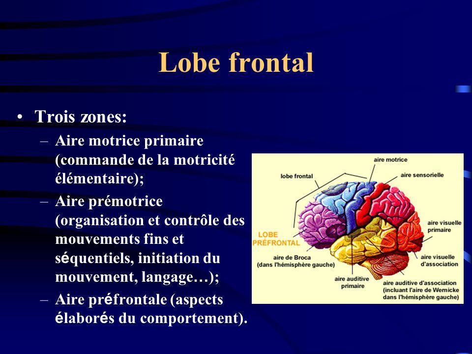 Lobe frontal Trois zones: –Aire motrice primaire (commande de la motricité élémentaire); –Aire prémotrice (organisation et contrôle des mouvements fin