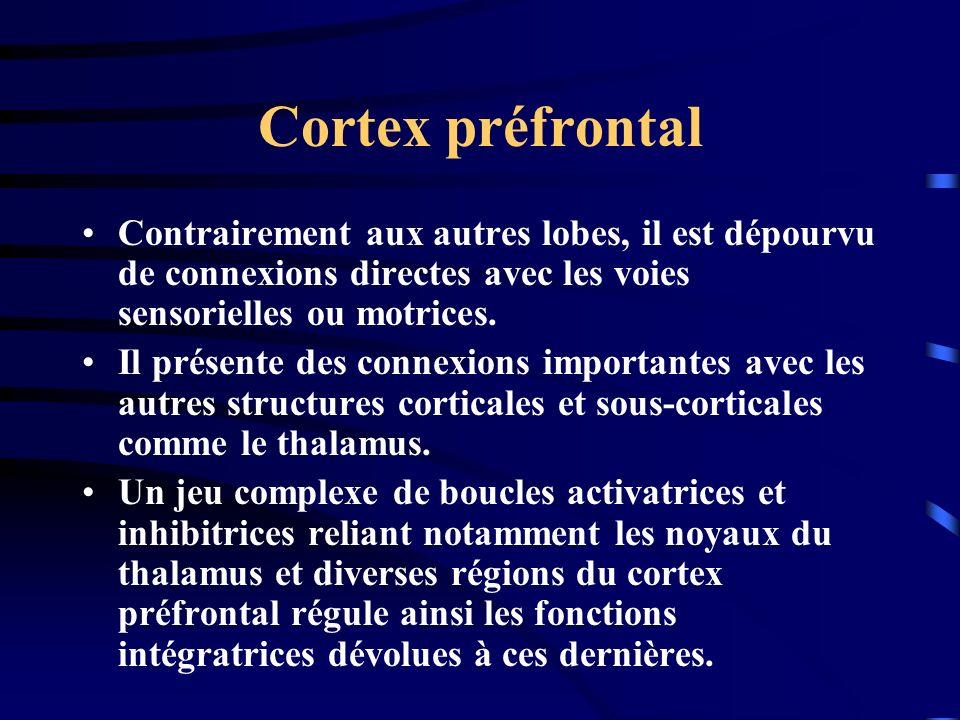 Cortex préfrontal Contrairement aux autres lobes, il est dépourvu de connexions directes avec les voies sensorielles ou motrices. Il présente des conn