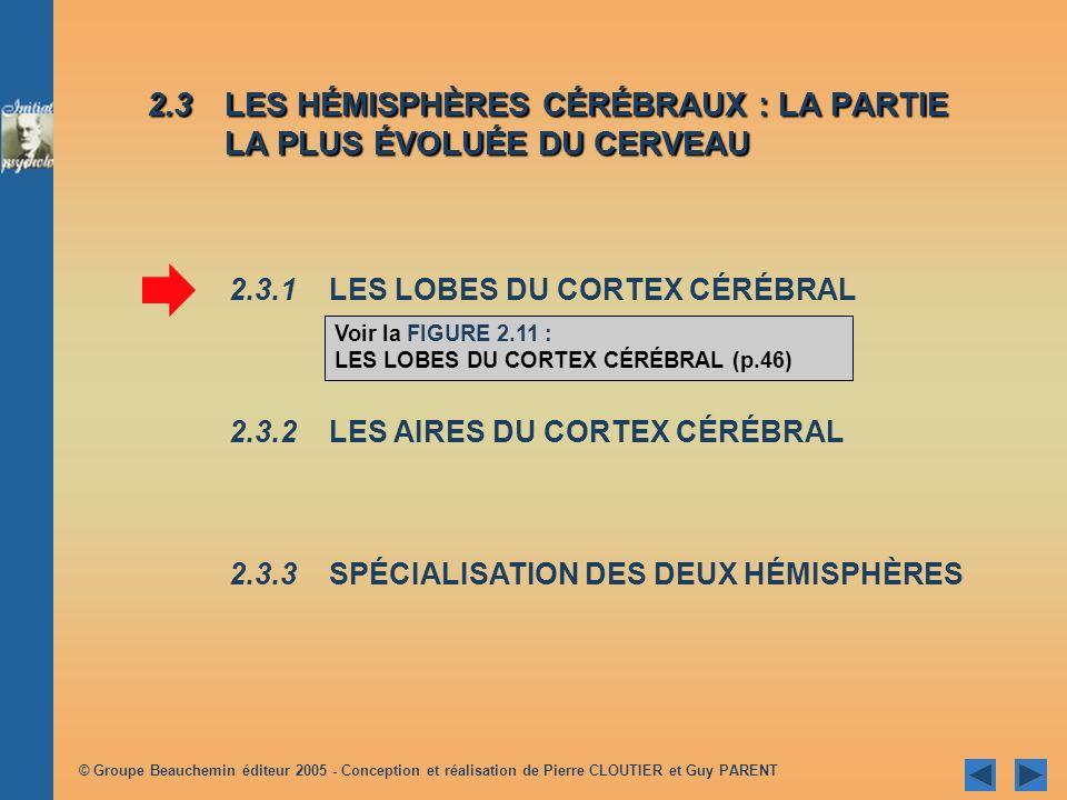 © Groupe Beauchemin éditeur 2005 - Conception et réalisation de Pierre CLOUTIER et Guy PARENT 2.3LES HÉMISPHÈRES CÉRÉBRAUX : LA PARTIE LA PLUS ÉVOLUÉE