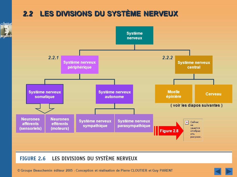 © Groupe Beauchemin éditeur 2005 - Conception et réalisation de Pierre CLOUTIER et Guy PARENT Système nerveux Système nerveux somatique Système nerveu