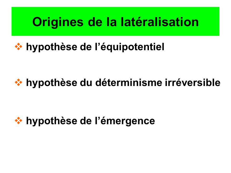 Origines de la latéralisation hypothèse de léquipotentiel hypothèse du déterminisme irréversible hypothèse de lémergence