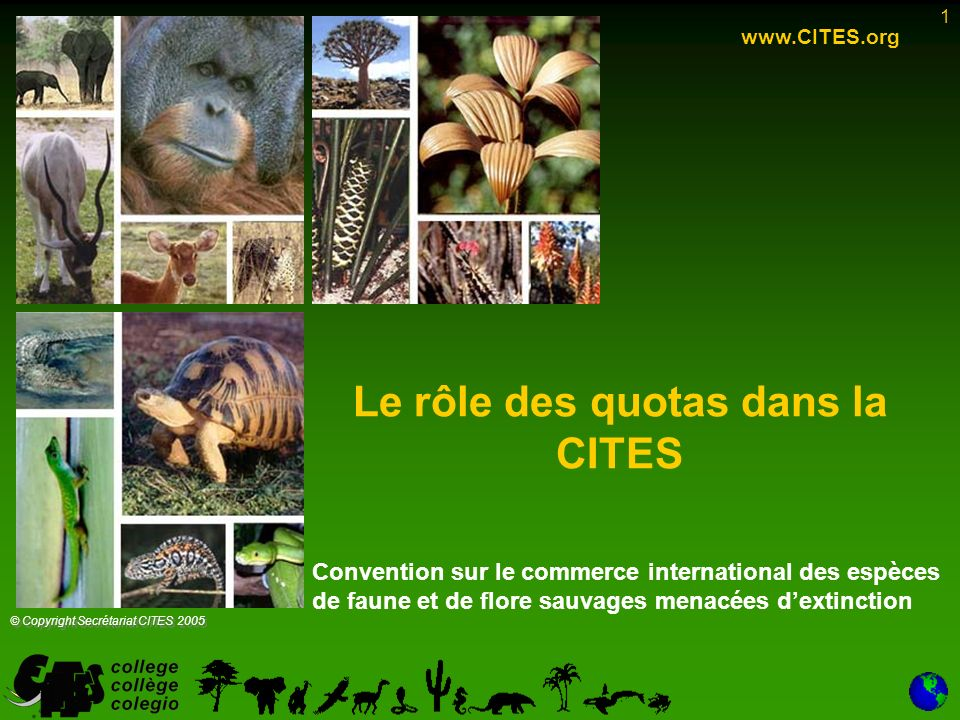 1 Le rôle des quotas dans la CITES www.CITES.org © Copyright Secrétariat CITES 2005 Convention sur le commerce international des espèces de faune et de flore sauvages menacées dextinction