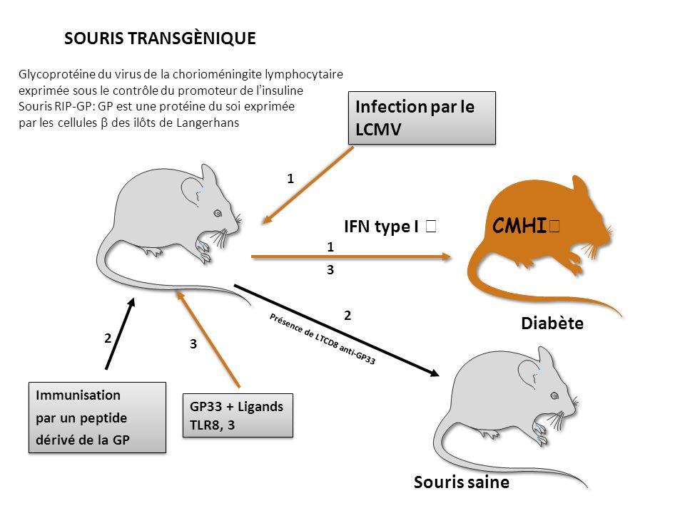 Glycoprotéine du virus de la chorioméningite lymphocytaire exprimée sous le contrôle du promoteur de linsuline Souris RIP-GP: GP est une protéine du s