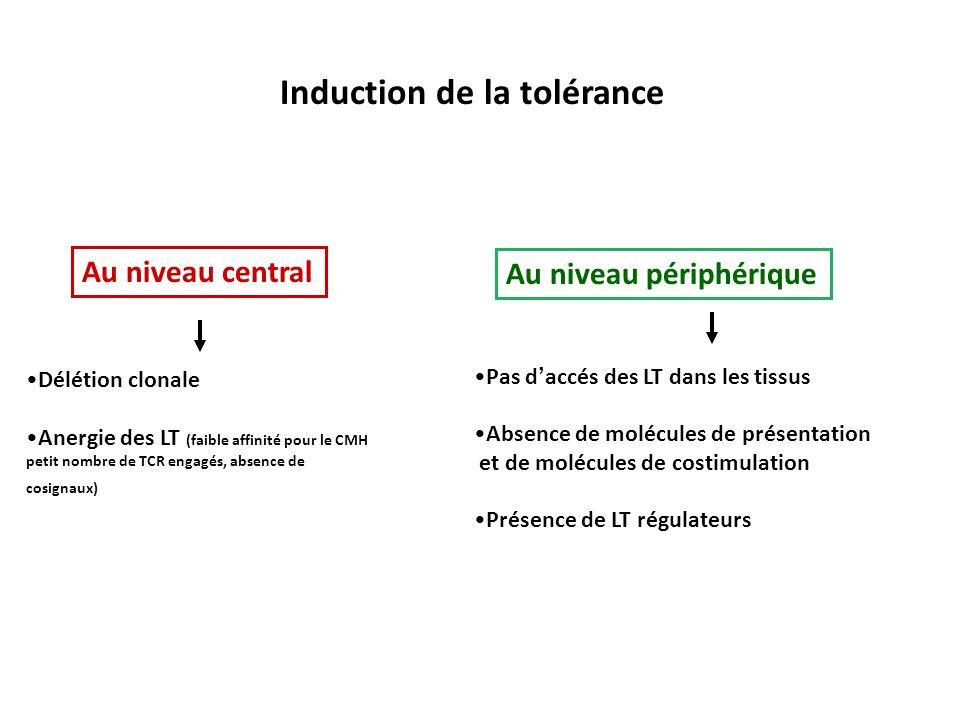 Induction de la tolérance Délétion clonale Anergie des LT (faible affinité pour le CMH petit nombre de TCR engagés, absence de cosignaux) Au niveau ce
