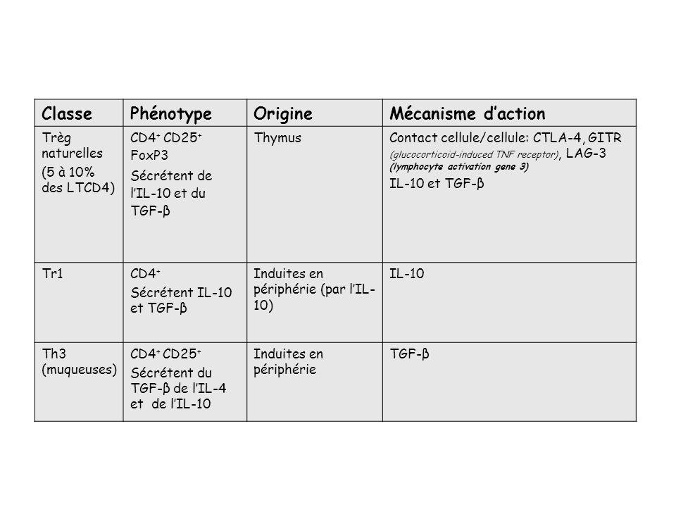 ClassePhénotypeOrigineMécanisme daction Trèg naturelles (5 à 10% des LTCD4) CD4 + CD25 + FoxP3 Sécrétent de lIL-10 et du TGF-β ThymusContact cellule/c