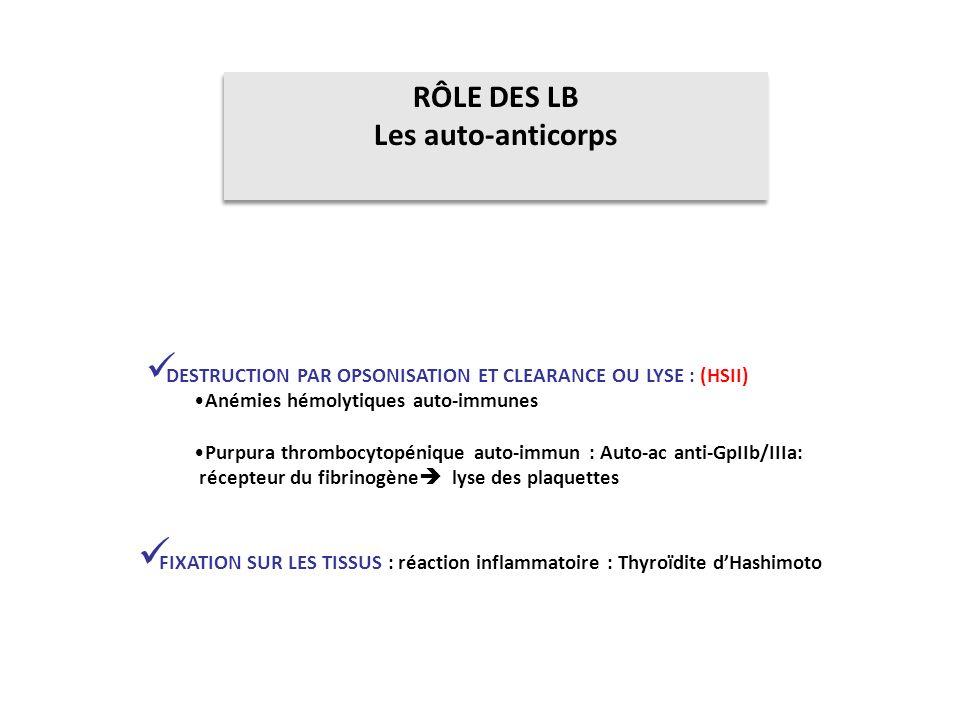 RÔLE DES LB Les auto-anticorps RÔLE DES LB Les auto-anticorps DESTRUCTION PAR OPSONISATION ET CLEARANCE OU LYSE : (HSII) Anémies hémolytiques auto-imm