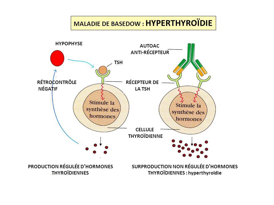 HYPOPHYSE PRODUCTION RÉGULÉE DHORMONES THYROÏDIENNES SURPRODUCTION NON RÉGULÉE DHORMONES THYROÏDIENNES : hyperthyroïdie CELLULE THYROÏDIENNE AUTOAC AN