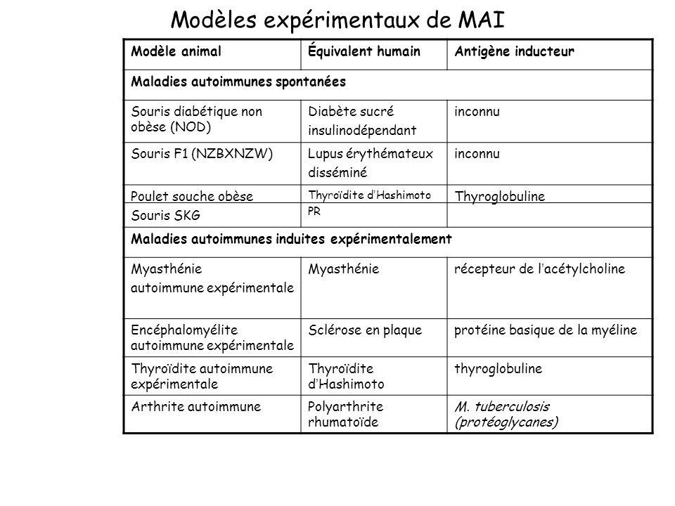 Modèles expérimentaux de MAI Modèle animalÉquivalent humainAntigène inducteur Maladies autoimmunes spontanées Souris diabétique non obèse (NOD) Diabèt