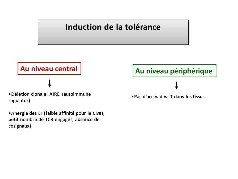 Induction de la tolérance Délétion clonale: AIRE (autoimmune regulator) Anergie des LT (faible affinité pour le CMH, petit nombre de TCR engagés, abse
