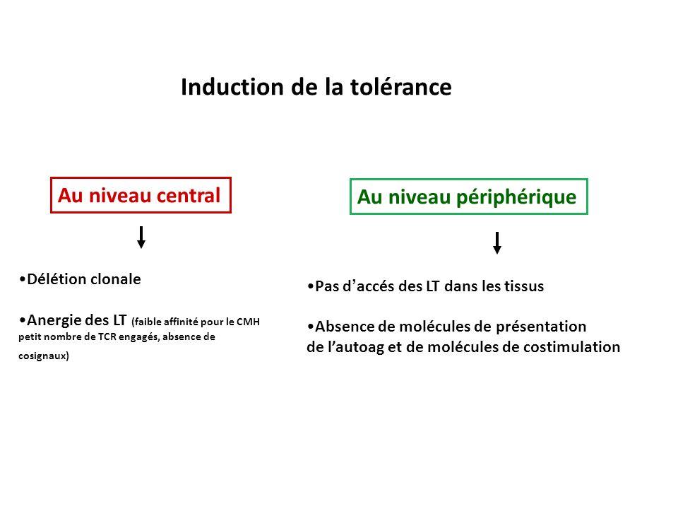 Induction de la tolérance Au niveau central Au niveau périphérique Délétion clonale Anergie des LT (faible affinité pour le CMH petit nombre de TCR en
