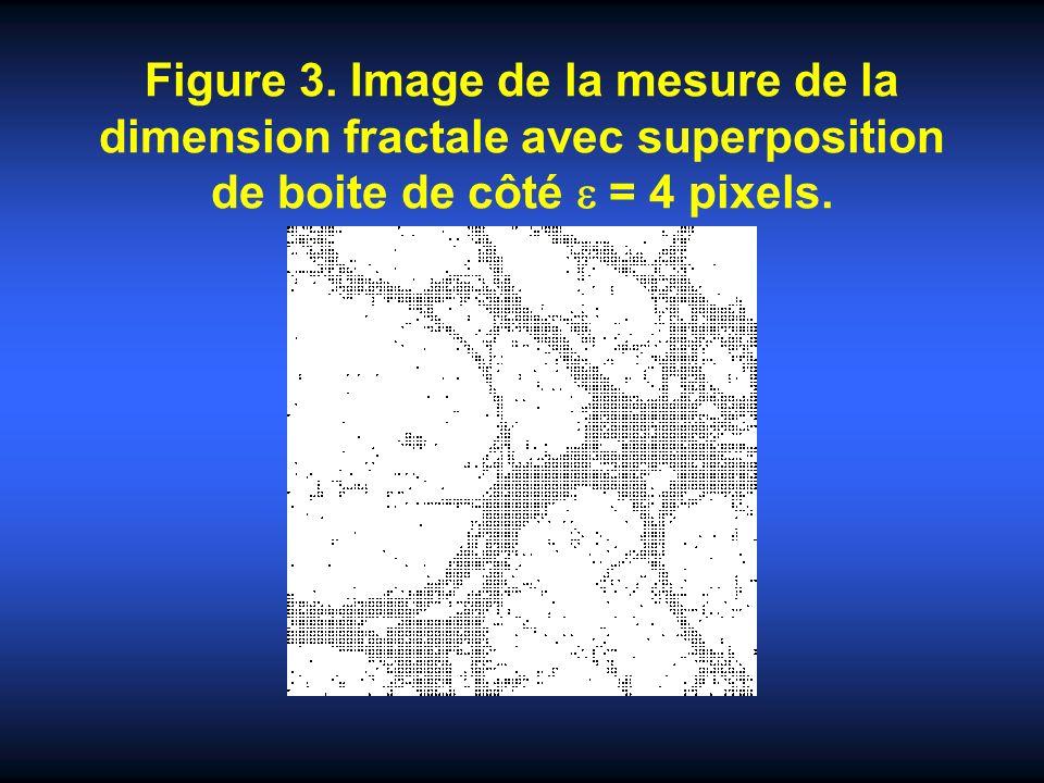Figure 3. Image de la mesure de la dimension fractale avec superposition de boite de côté = 4 pixels.