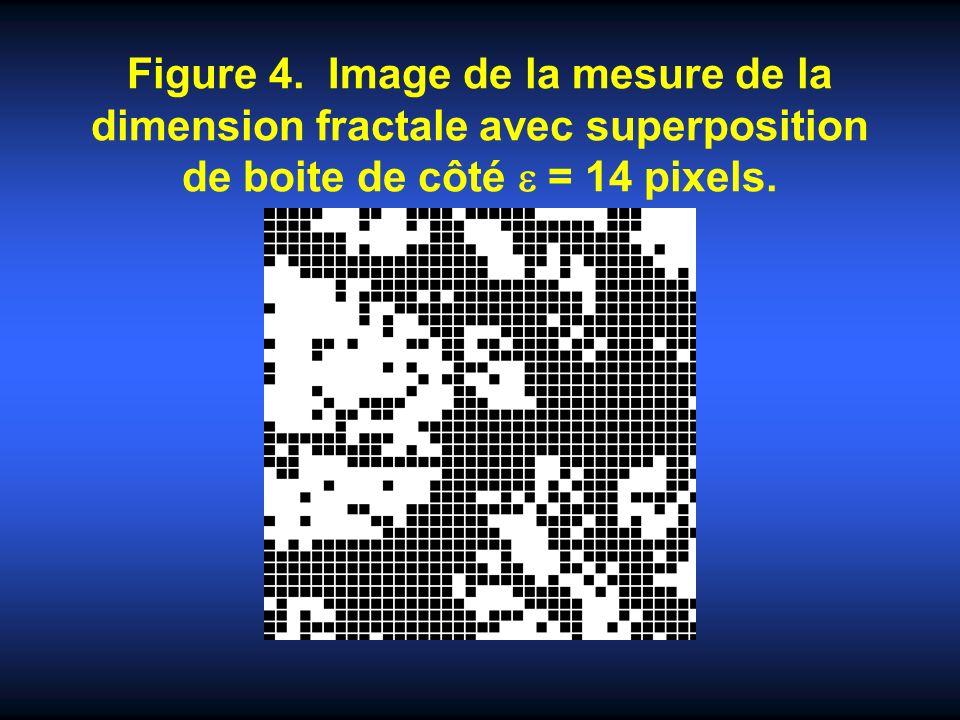 Figure 4. Image de la mesure de la dimension fractale avec superposition de boite de côté = 14 pixels.
