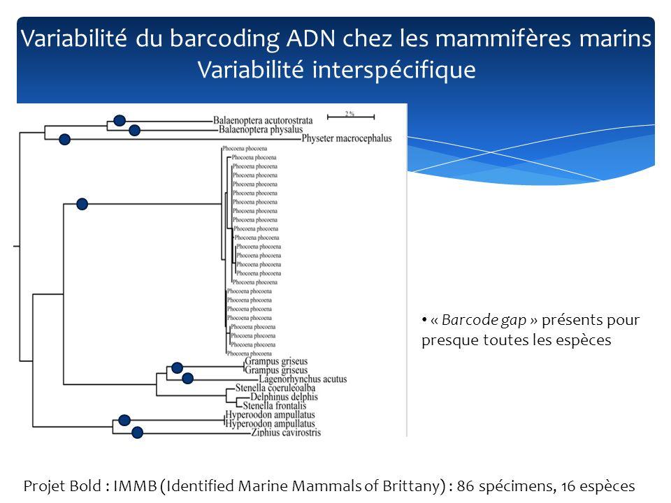 « Barcode gap » présents pour presque toutes les espèces Projet Bold : IMMB (Identified Marine Mammals of Brittany) : 86 spécimens, 16 espèces Variabi