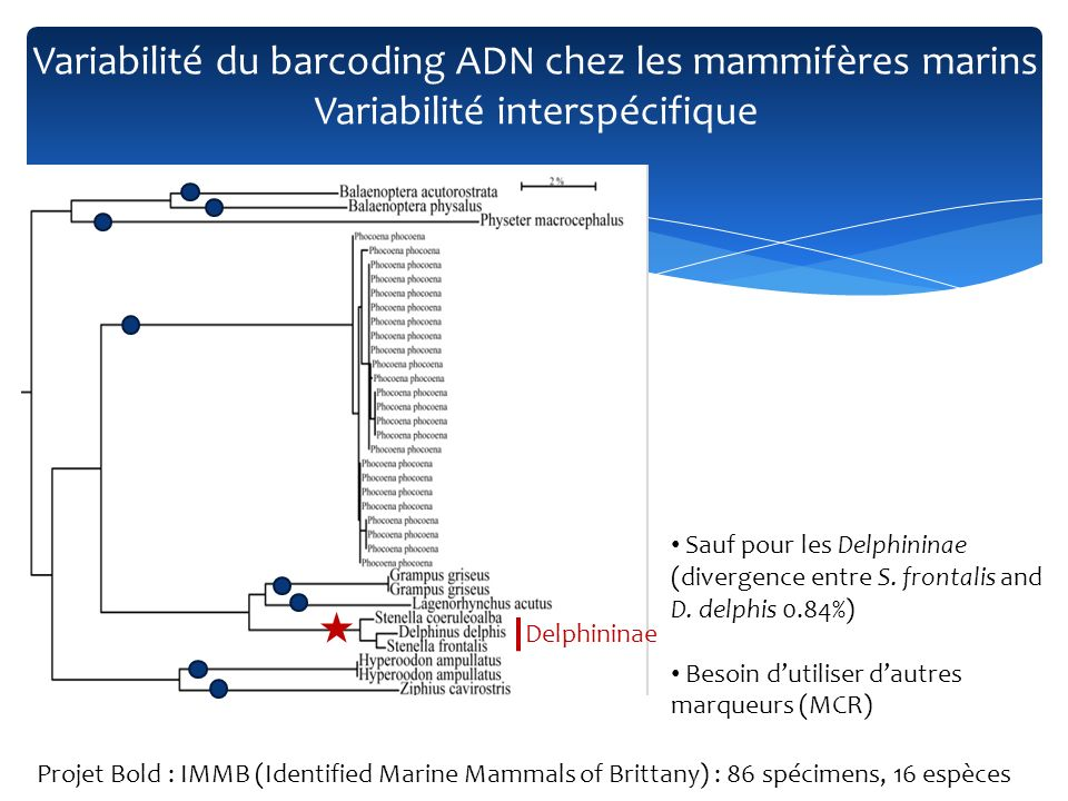 Sauf pour les Delphininae (divergence entre S. frontalis and D. delphis 0.84%) Besoin dutiliser dautres marqueurs (MCR) Delphininae Variabilité du bar