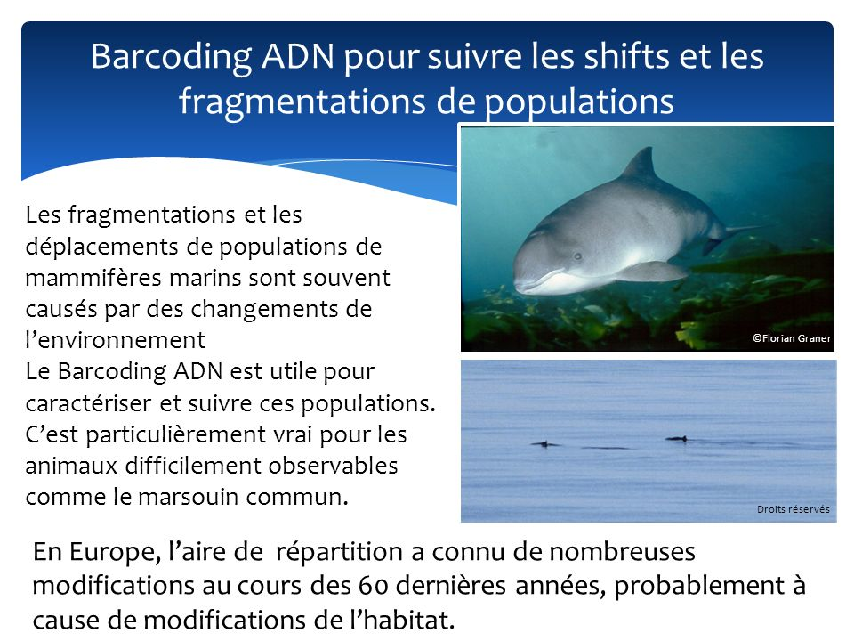 Barcoding ADN pour suivre les shifts et les fragmentations de populations ©Florian Graner Les fragmentations et les déplacements de populations de mam