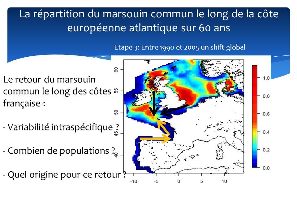 La répartition du marsouin commun le long de la côte européenne atlantique sur 60 ans Etape 3: Entre 1990 et 2005 un shift global Le retour du marsoui