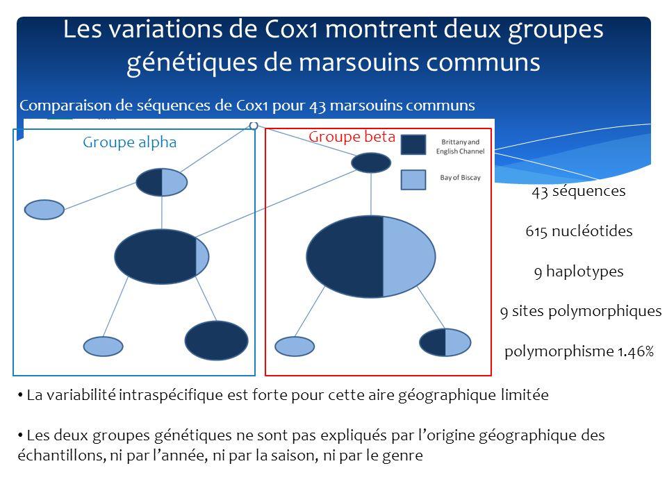 Les variations de Cox1 montrent deux groupes génétiques de marsouins communs 43 séquences 615 nucléotides 9 haplotypes 9 sites polymorphiques polymorp