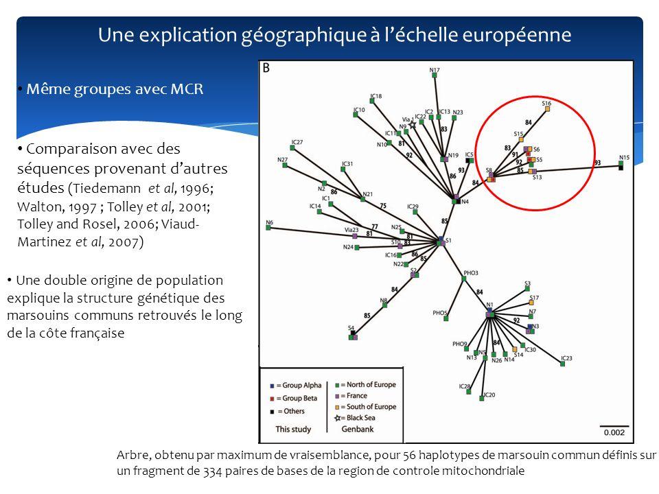 Une explication géographique à léchelle européenne Arbre, obtenu par maximum de vraisemblance, pour 56 haplotypes de marsouin commun définis sur un fr