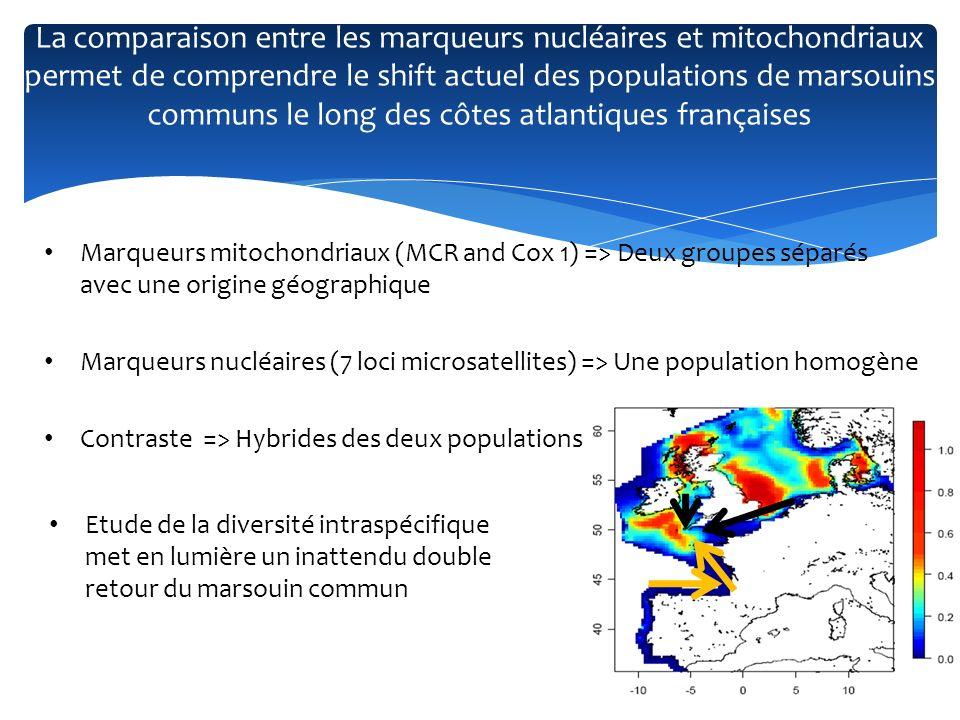 La comparaison entre les marqueurs nucléaires et mitochondriaux permet de comprendre le shift actuel des populations de marsouins communs le long des