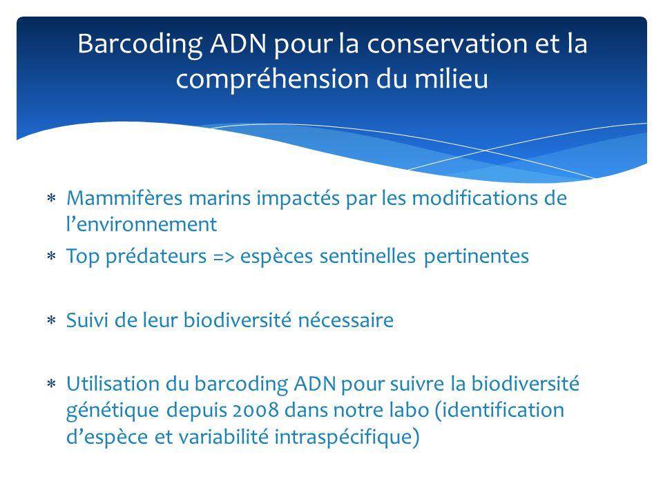 Mammifères marins impactés par les modifications de lenvironnement Top prédateurs => espèces sentinelles pertinentes Suivi de leur biodiversité nécess