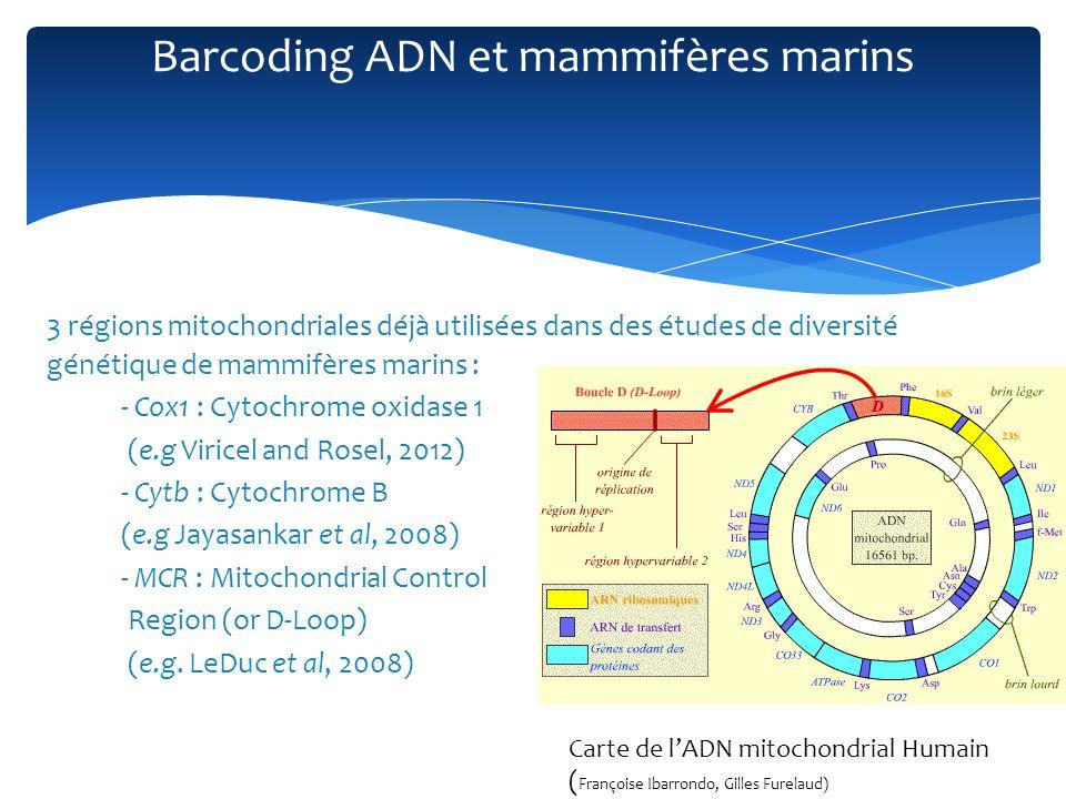 3 régions mitochondriales déjà utilisées dans des études de diversité génétique de mammifères marins : - Cox1 : Cytochrome oxidase 1 (e.g Viricel and