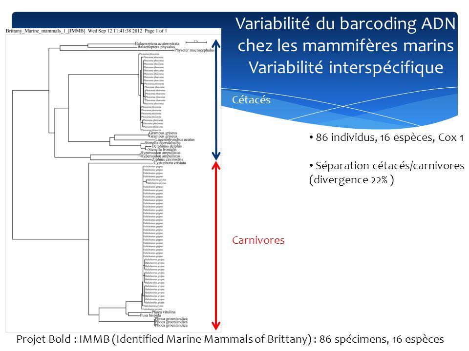 Variabilité du barcoding ADN chez les mammifères marins Variabilité interspécifique 86 individus, 16 espèces, Cox 1 Séparation cétacés/carnivores (div